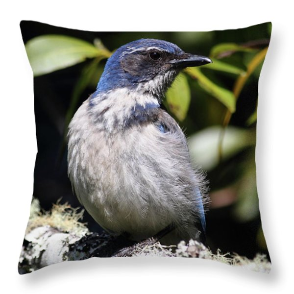 Scrub Jay . 7d6670 Throw Pillow by Wingsdomain Art and Photography
