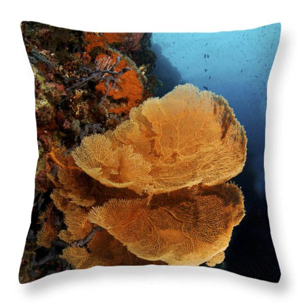 Sea Fan Coral - Indonesia Throw Pillow by Steve Rosenberg - Printscapes