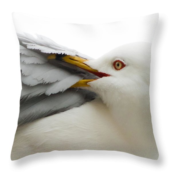 Seagull Pruning His Feathers Throw Pillow by Keith Allen