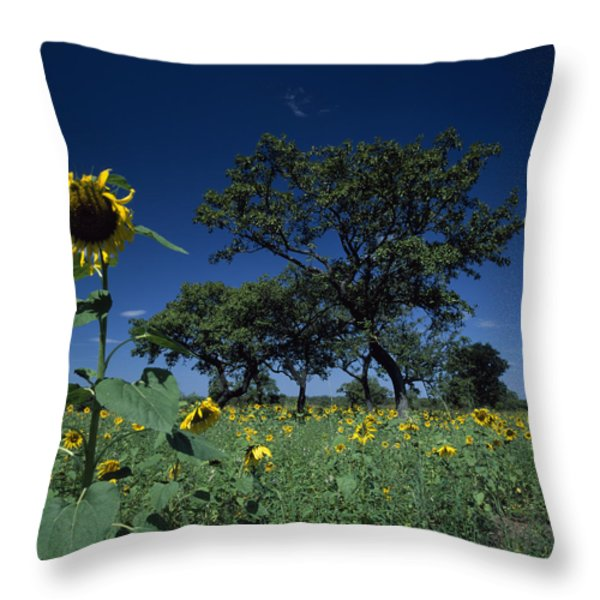 Shea Trees Intercropped With Sunflowers Throw Pillow by David Pluth