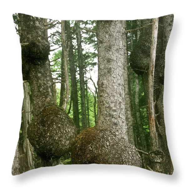 Sitka Spruce Burls on the Olympic Coast Olympic National Park WA Throw Pillow by Christine Till