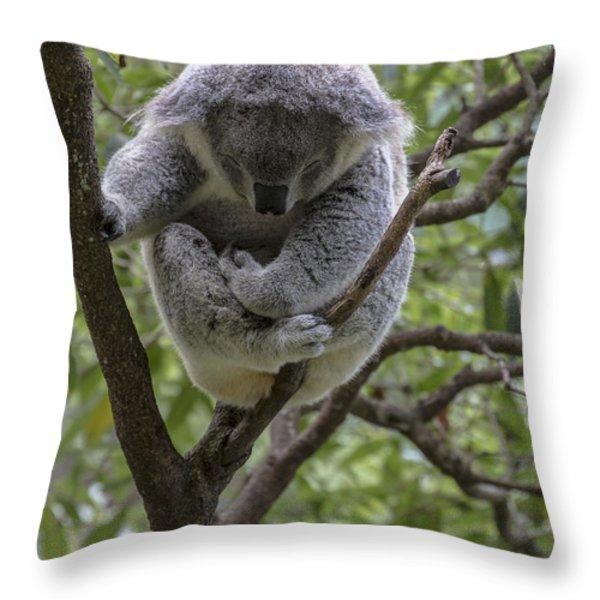 Sleepy koala Throw Pillow by Sheila Smart