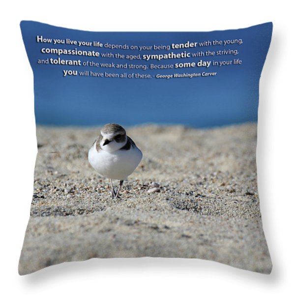 Snowy Plover Message Print Throw Pillow by TB Sojka