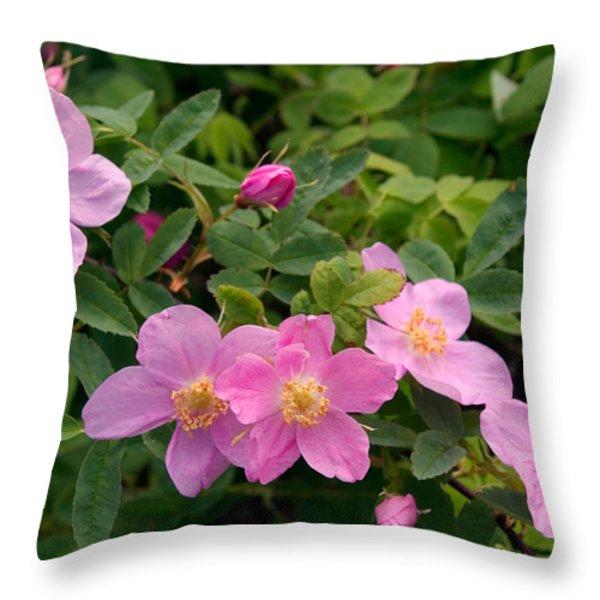 Soft Light On Nookta Rose Rosa Nutkana Throw Pillow by Ralph Lee Hopkins