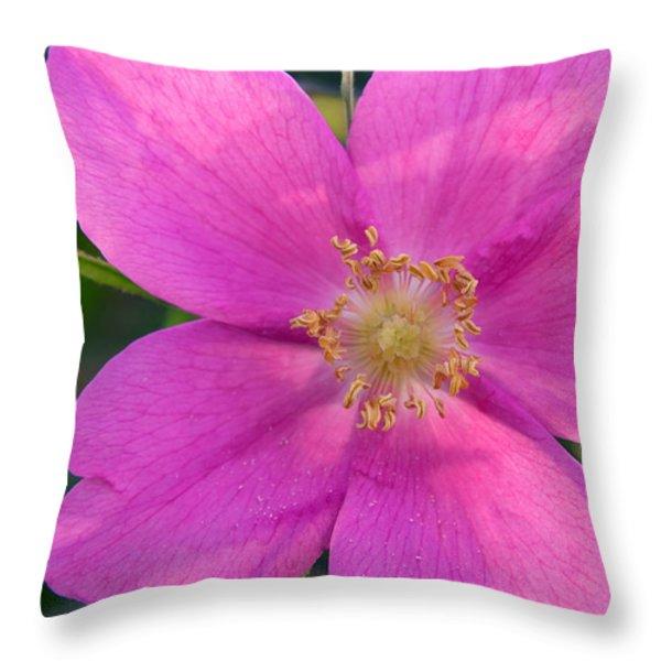 Soft Light On Nootka Rose Rosa Nutkana Throw Pillow by Ralph Lee Hopkins