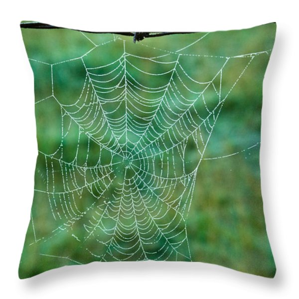 Spider Web in the Springtime Throw Pillow by Douglas Barnett