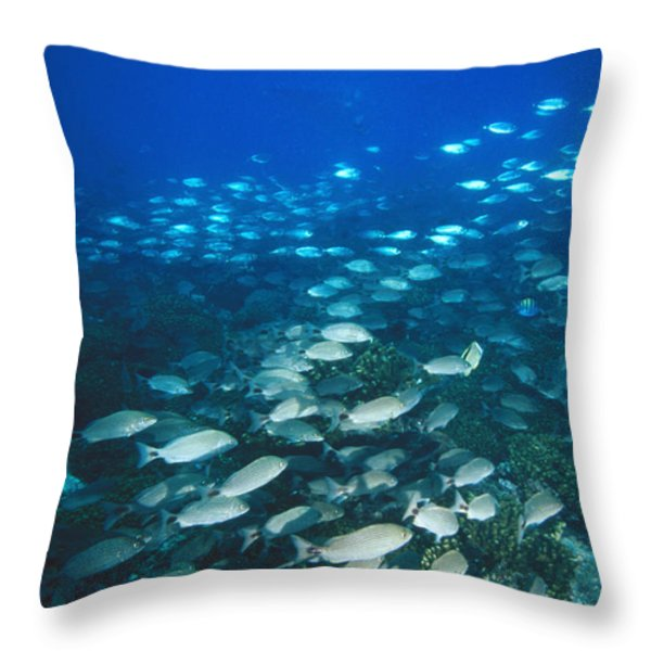Spotted Grunt And Herring Fish Swimming Throw Pillow by James Forte