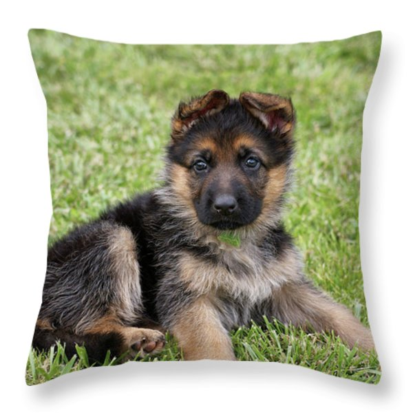 Spring Puppy Throw Pillow by Sandy Keeton
