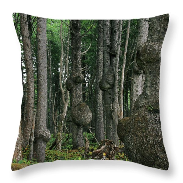 Spruce Burls Olympic National Park Wa Throw Pillow by Christine Till