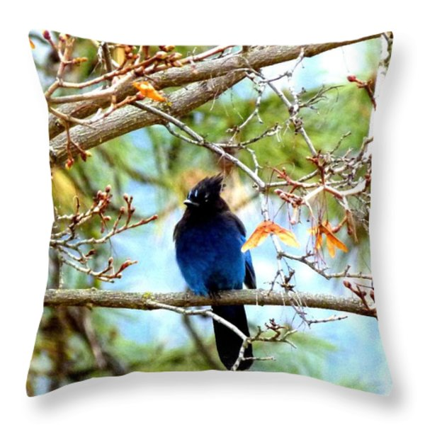 Stellar Jay Majesty Throw Pillow by Will Borden