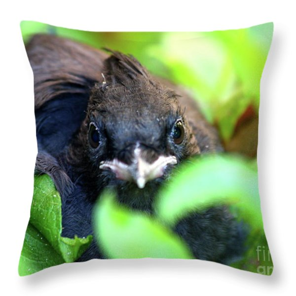 Stellers Jay Chick . 40D501 Throw Pillow by Wingsdomain Art and Photography