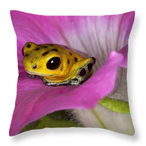 Stepping Out Throw Pillow by Janet Fikar