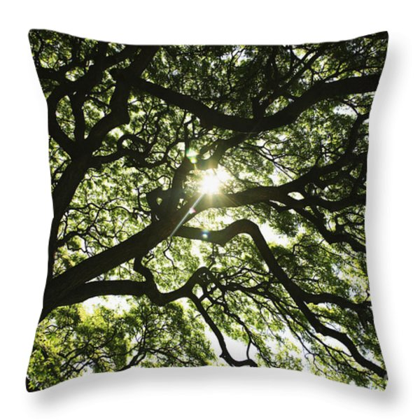 Sunburst Through Tree Throw Pillow by Brandon Tabiolo - Printscapes