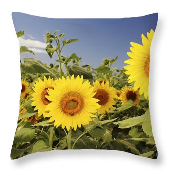 Sunflowers on North Shore Throw Pillow by Vince Cavataio - Printscapes