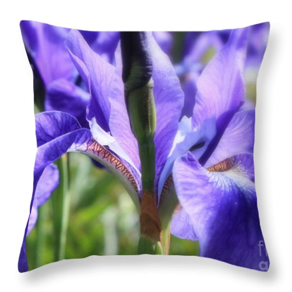Sunlight on Blue Irises Throw Pillow by Carol Groenen