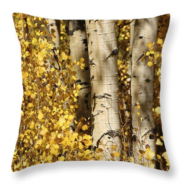 Sunlight Shines On Golden Aspen Leaves Throw Pillow by Charles Kogod
