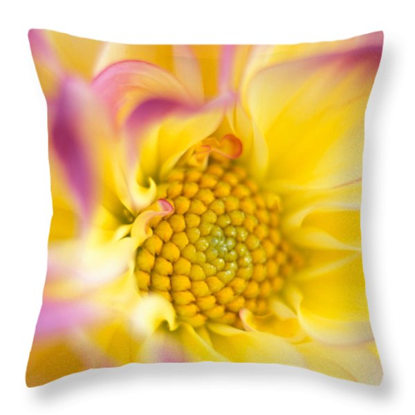 Swirly Dahlia Throw Pillow by Kathy Yates