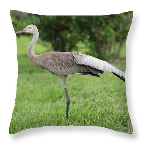 Ta Da Throw Pillow by Carol Groenen