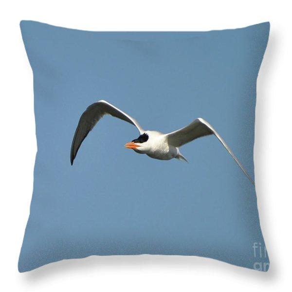 Tern Flight Throw Pillow by Al Powell Photography USA