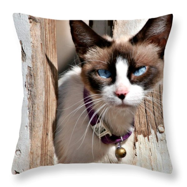 The Cat A Purrfect Carnivore Throw Pillow by Christine Till
