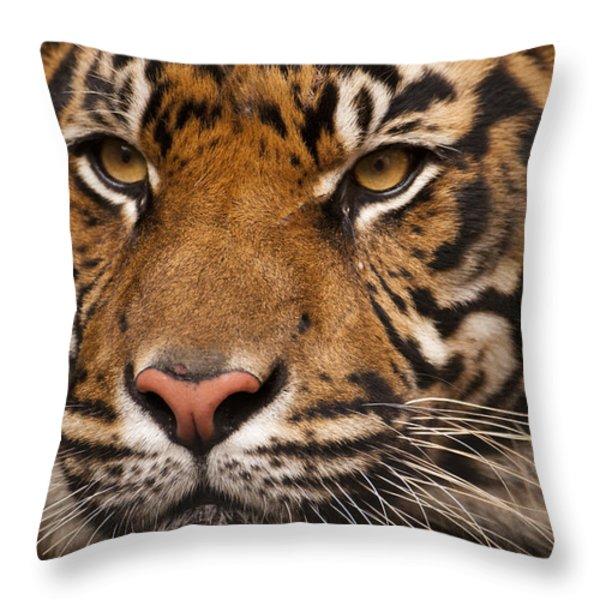 The Sumatran Tiger Cat Throw Pillow by Chad Davis
