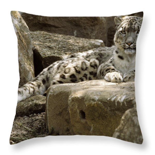 The Watchful Stare Of A Snow Leopard Throw Pillow by Jason Edwards