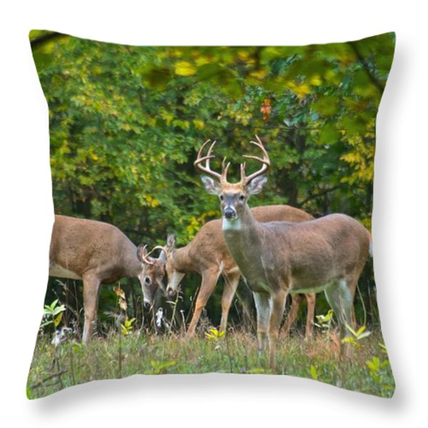 Three Bucks_0054_4463 Throw Pillow by Michael Peychich
