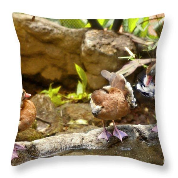 Three Ducks Throw Pillow by Madeline Ellis