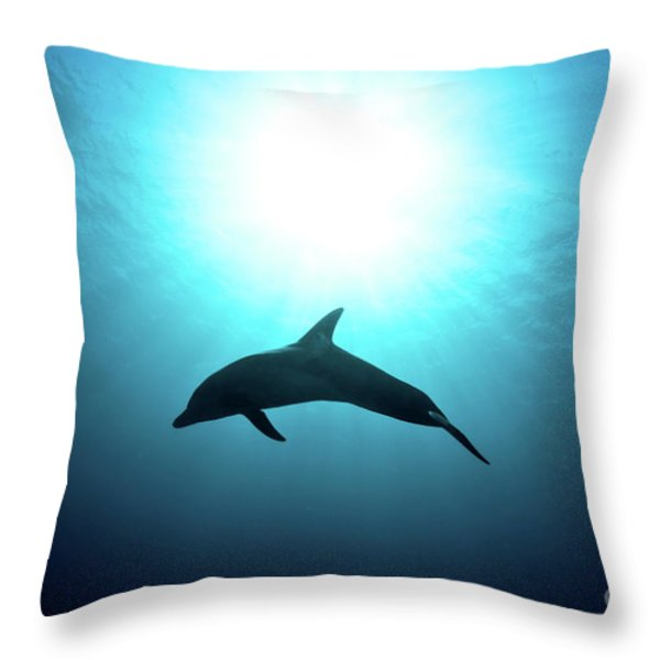 three year old Dolphin  Throw Pillow by Hagai Nativ