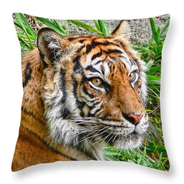 Tiger Portrait Throw Pillow by Jennie Marie Schell
