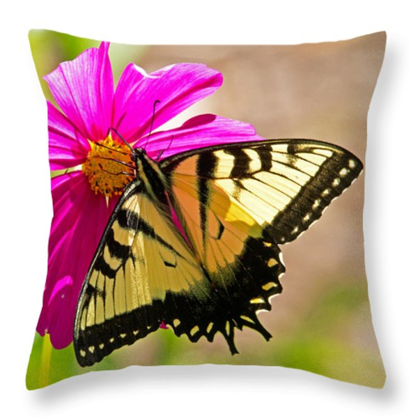Tiger Swallowtail Butterfly. Throw Pillow by David Freuthal