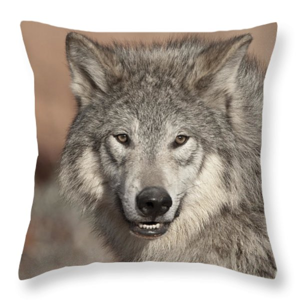 Timber Wolf Portrait Throw Pillow by Sandra Bronstein