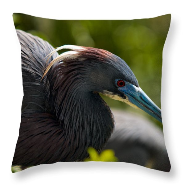 Tri-colored Heron Throw Pillow by Christopher Holmes
