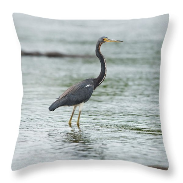 Tricolored.. Throw Pillow by Nina Stavlund
