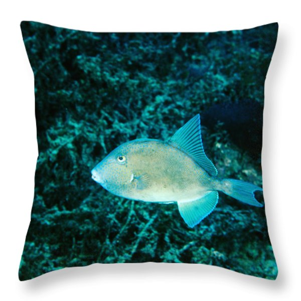 Triggerfish Swimming Over Coral Reef Throw Pillow by James Forte