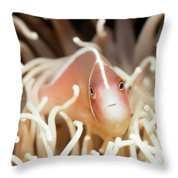 Tropical Fish Pink Clownfish Throw Pillow by MotHaiBaPhoto Prints