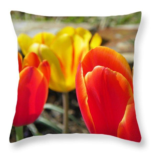 Tulip Celebration Throw Pillow by KAREN WILES