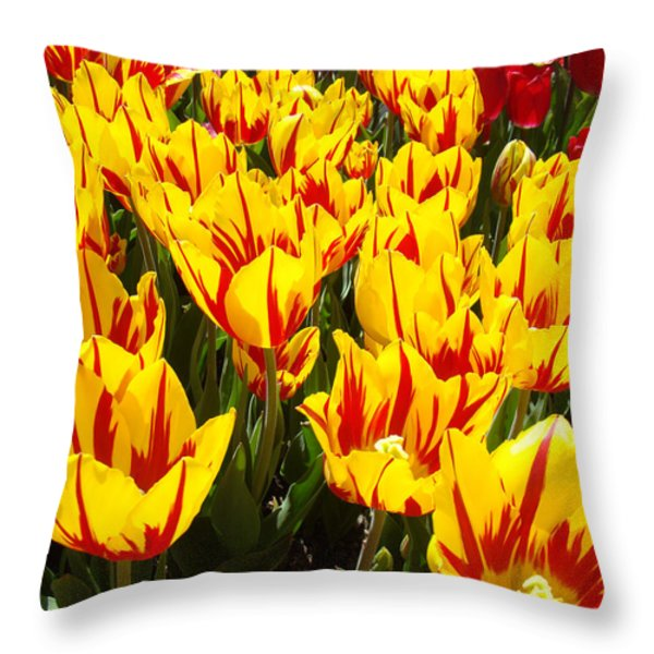 Tulip Flowers Festival Yellow Red Art Prints Tulips Throw Pillow by Baslee Troutman