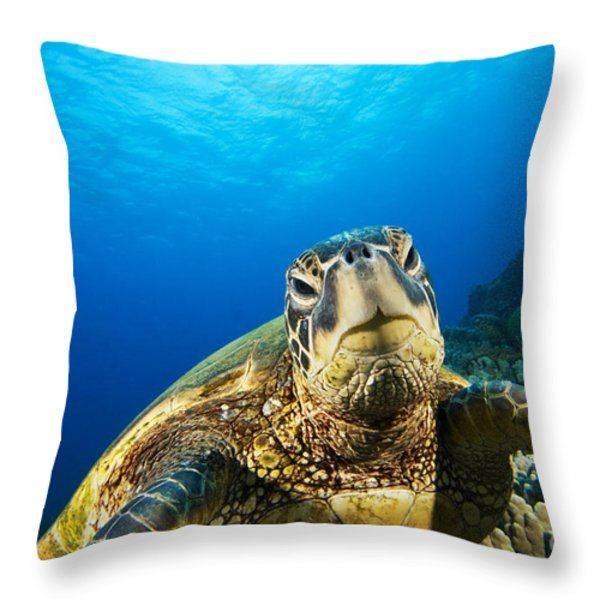 Turtle Stare Throw Pillow by Dave Fleetham - Printscapes