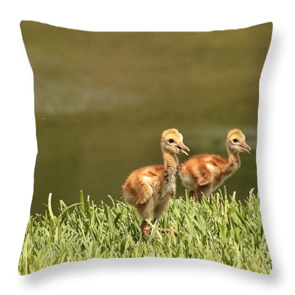 Two Chicks Throw Pillow by Carol Groenen