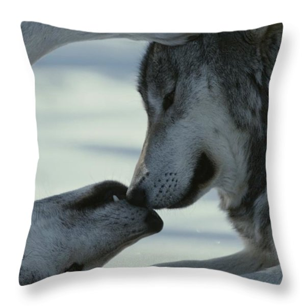 Two Gray Wolves, Canis Lupus, Touch Throw Pillow by Jim And Jamie Dutcher