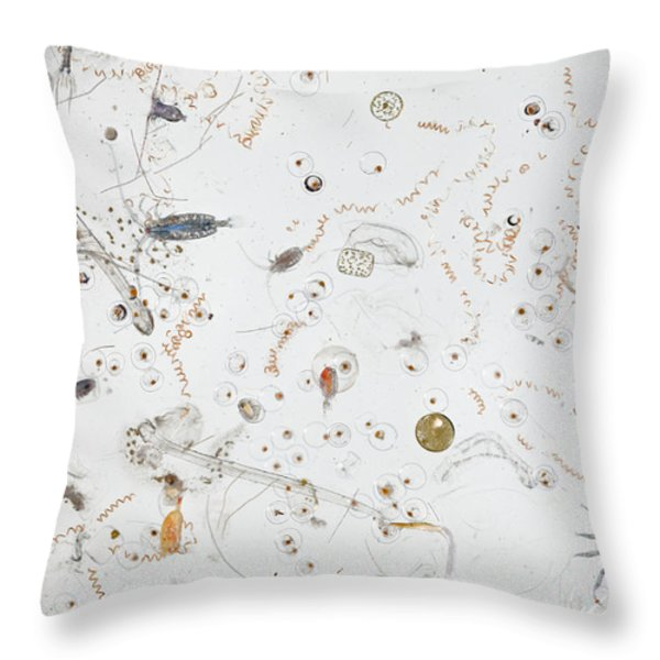 Under A Magnifier, A Splash Of Seawater Throw Pillow by David  Liittschwager