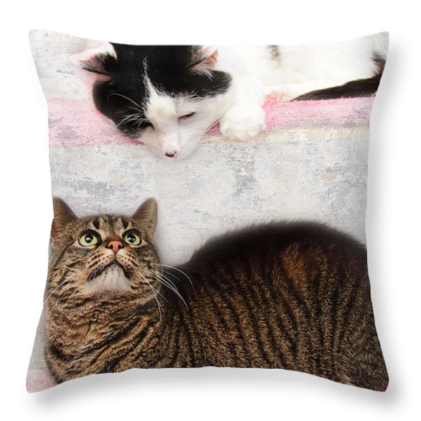 Upstairs Downstairs With Emmy And Pepper Throw Pillow by Andee Design