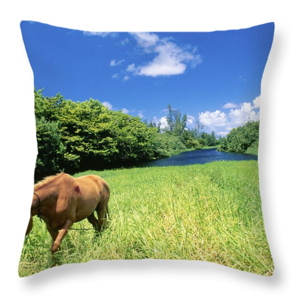 Wainiha Valley Throw Pillow by Peter French - Printscapes