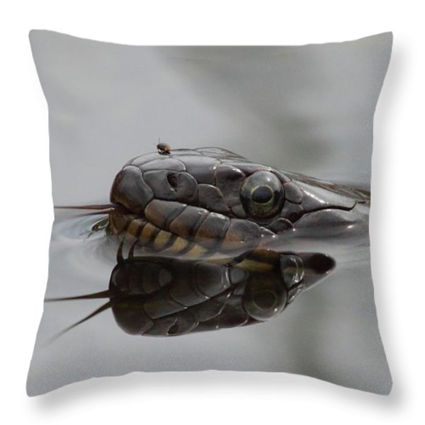 Water Snake And Hitchhiker Throw Pillow by Bruce J Robinson