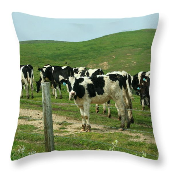 When the Cows Come Home Throw Pillow by Wingsdomain Art and Photography