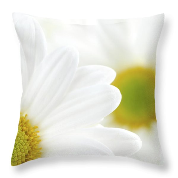 White daisies Throw Pillow by Elena Elisseeva