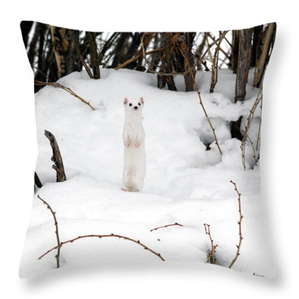 White Ermine Throw Pillow by Leland D Howard
