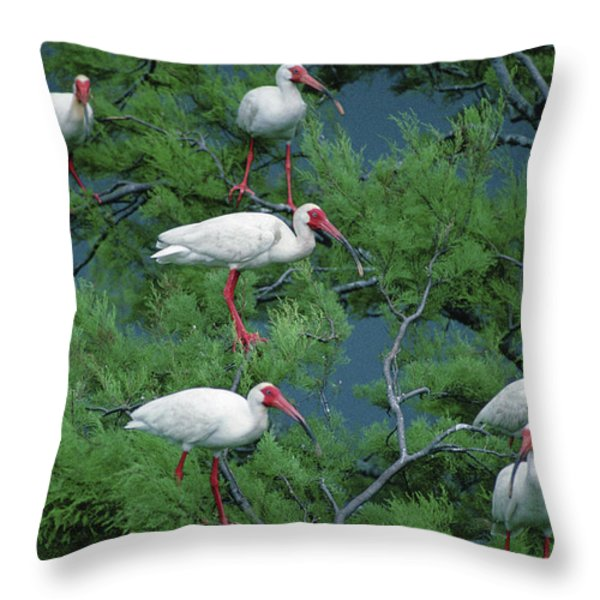 White Ibis At Galveston Bay Near Smith Throw Pillow by Joel Sartore