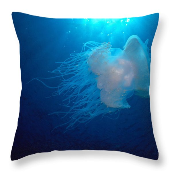 White Jellyfish Throw Pillow by Dave Fleetham - Printscapes